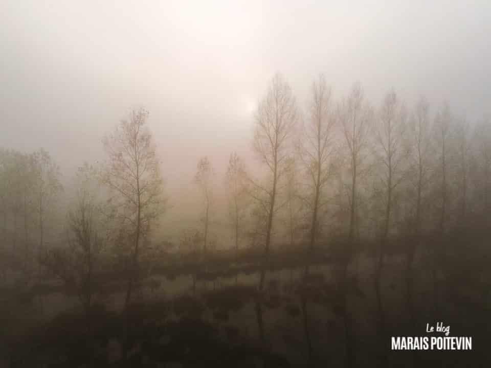 évaille brouillard marais poitevin novembre 2019 - 38