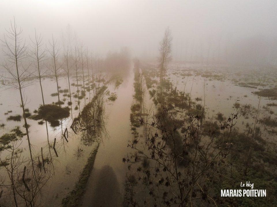 évaille brouillard marais poitevin novembre 2019 - 41