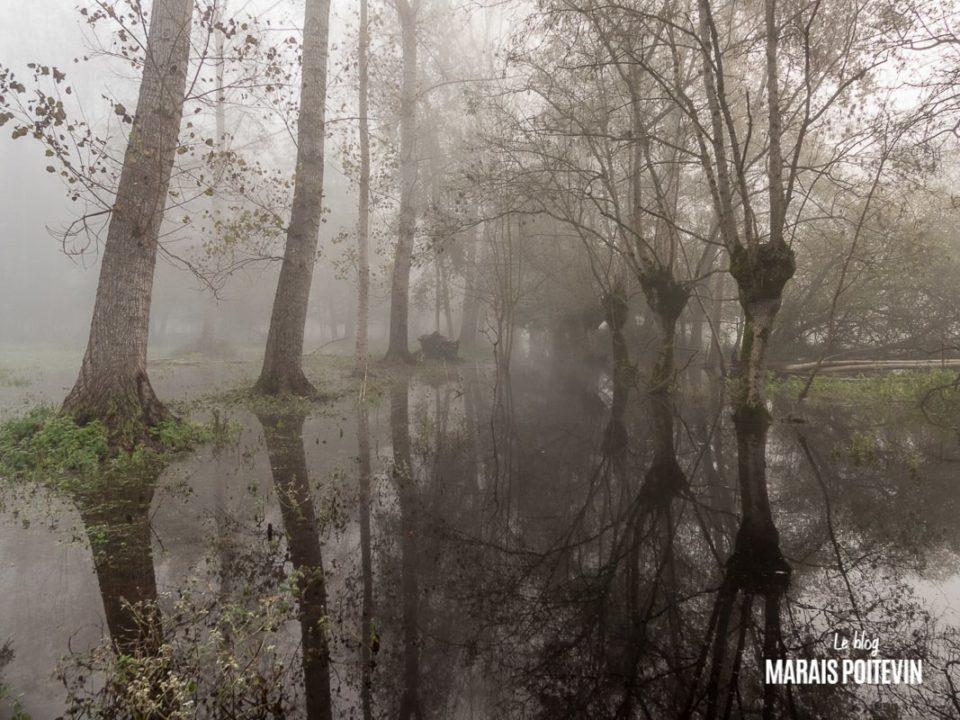 évaille brouillard marais poitevin novembre 2019 - 5