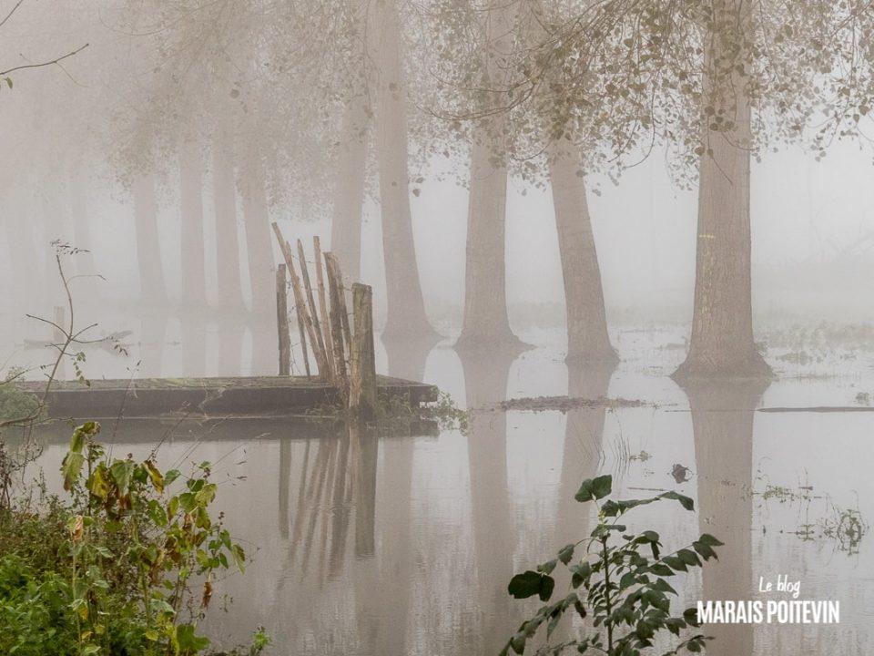 évaille brouillard marais poitevin novembre 2019 - 8