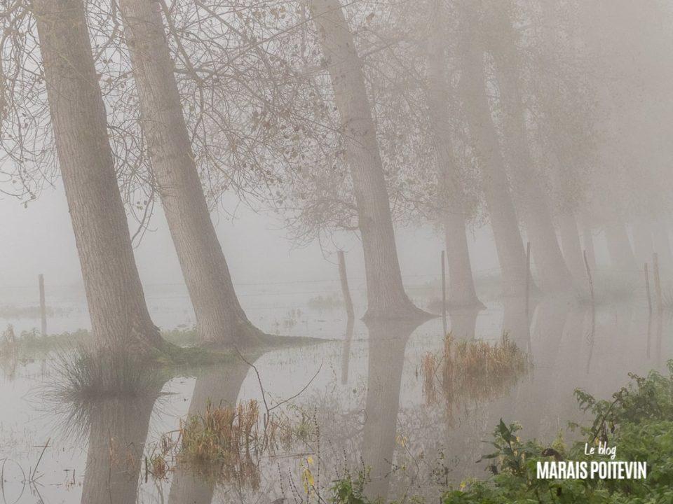 évaille brouillard marais poitevin novembre 2019 - 9