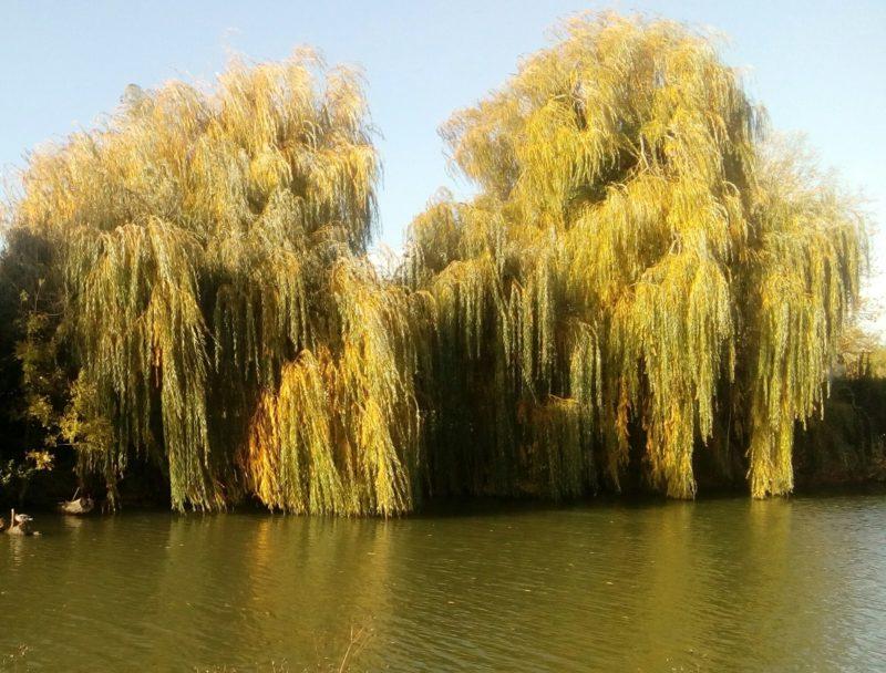 location gite vue sur rivière vendée marais poitevin