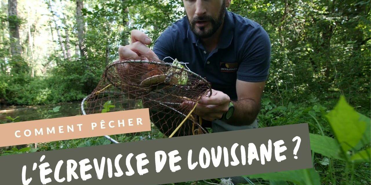 Comment pêcher l'écrevissede Louisiane?